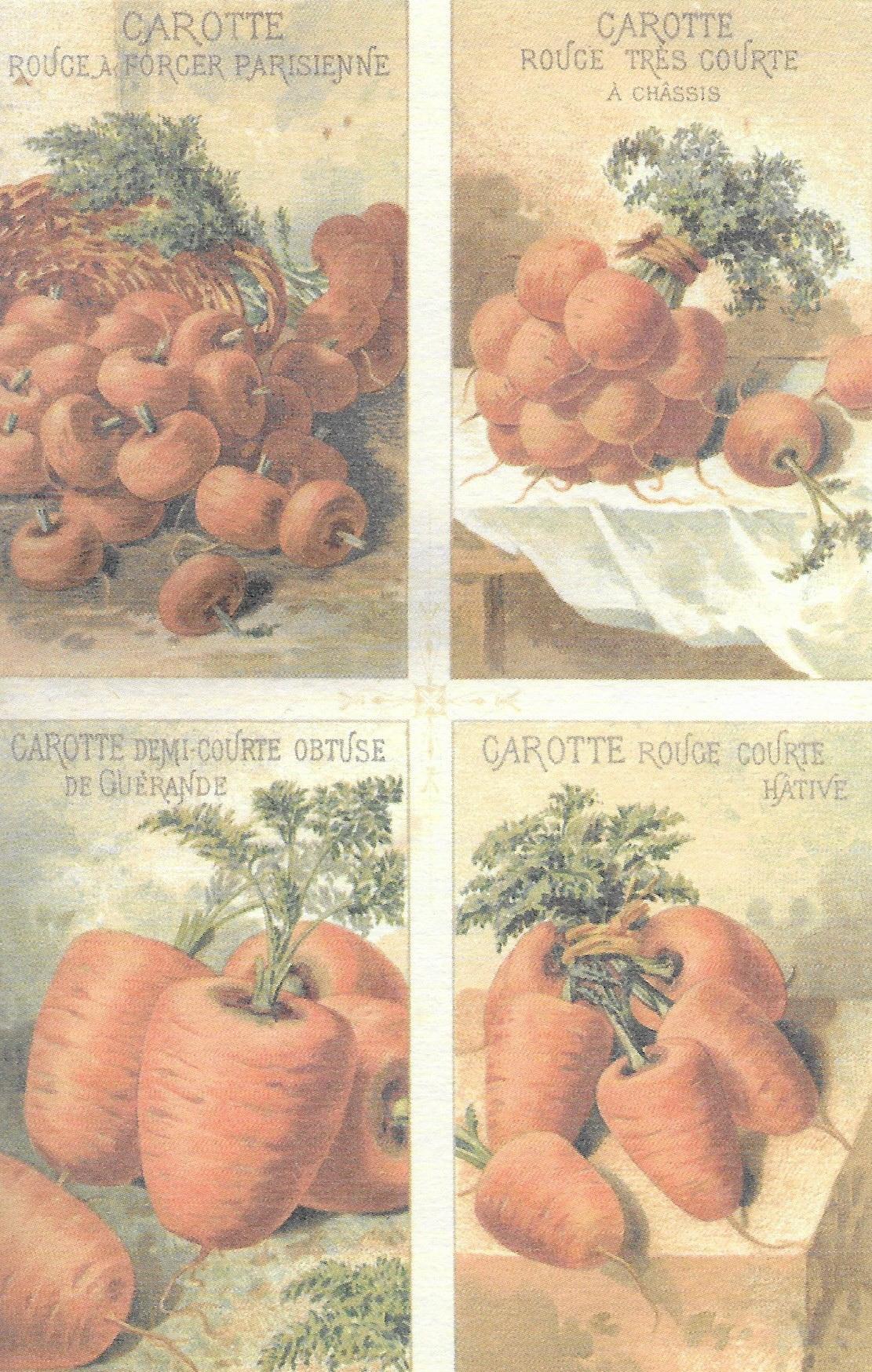 Variétés anciennes de carottes